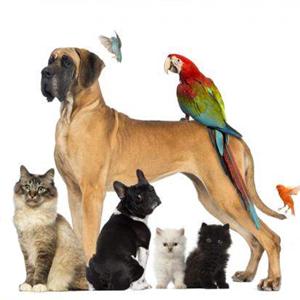 منتجات الحيوانات